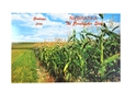 Nebraska Corn Field Postcard Nebraska Cornhuskers, Nebraska  Office Den & Entry, Huskers  Office Den & Entry, Nebraska Nebraska Corn Field Postcard, Huskers Nebraska Corn Field Postcard